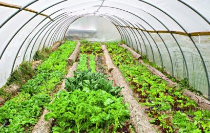 Growing an Organic Garden in a Greenhouse