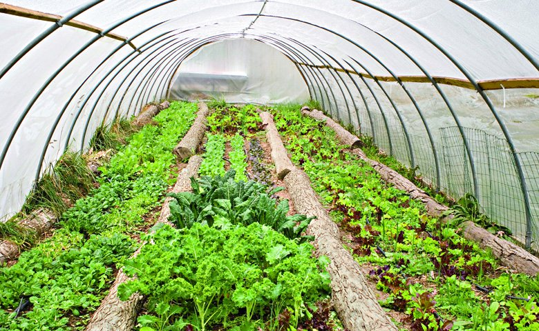 Growing an Organic Garden in a Greenhouse